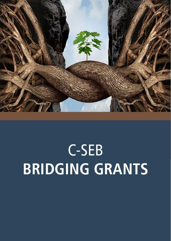Bridging Grant